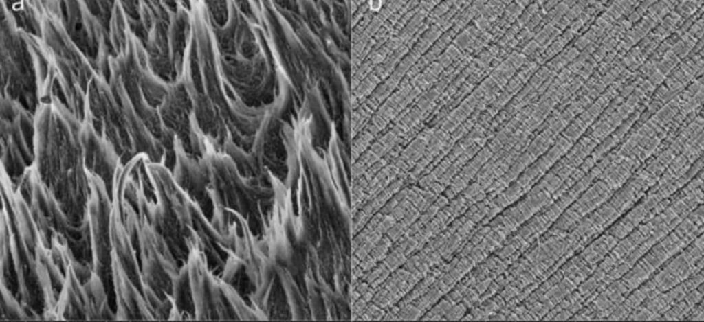 СЭМ-изображения черных областей (Изображения растровой электронной микроскопии черных областей)